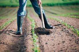 Indennità per operai agricoli a tempo determinato